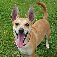 Adopt A Pet :: Suge - Grayslake, IL