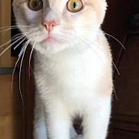 Adopt A Pet :: Moses - Covington, KY
