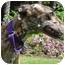 Photo 3 - Greyhound Dog for adoption in San Diego, California - Wiggins