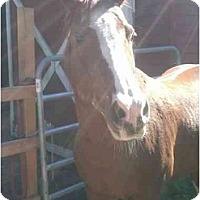 Adopt A Pet :: Reggie - Northford, CT