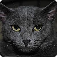 Adopt A Pet :: Lexi - Monroe, NC