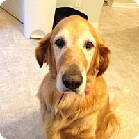 Adopt A Pet :: Molly - Yorktown, VA