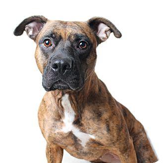 Boxer Mix Dog for adoption in Wilmington, Delaware - Mina
