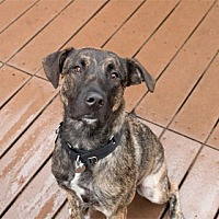 Adopt A Pet :: Poochie - Chicago, IL