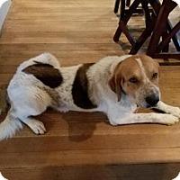 Adopt A Pet :: Maverick - Minerva, OH