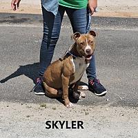 Adopt A Pet :: Skyler - Washington, GA
