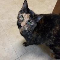 Adopt A Pet :: Ginger - Brooksville, FL