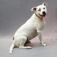 Adopt A Pet :: Herschel - Missouri - Fulton, MO