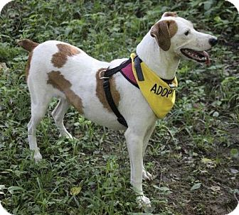 Hound (Unknown Type)/Mixed Breed (Medium) Mix Dog for adoption in Little Rock, Arkansas - Carly