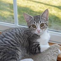 Adopt A Pet :: Louna - Carlisle, PA