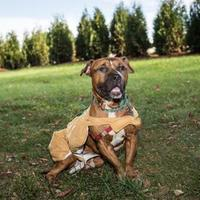 Adopt A Pet :: Putter - Lowell, MA