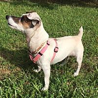 Adopt A Pet :: Midge in Leesville, LA - Dallas/Ft. Worth, TX
