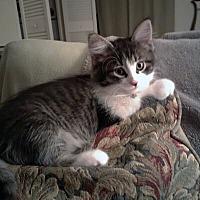Adopt A Pet :: Keriana - Mississauga, Ontario, ON