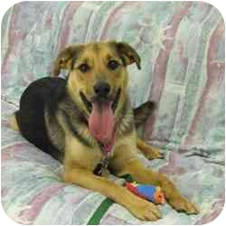 German Shepherd Dog Mix Dog for adoption in Batavia, Ohio - Nikon