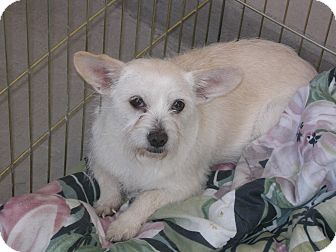 Terrier (Unknown Type, Small) Mix Dog for adoption in Las Vegas, Nevada - Makey