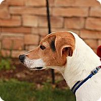 Adopt A Pet :: Isis - Lancaster, OH