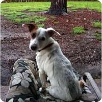 Adopt A Pet :: Elliot in Houston - Houston, TX