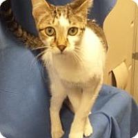 Adopt A Pet :: K-Fielding1-TRex - Colorado Springs, CO