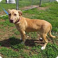 Adopt A Pet :: Bella - Franklin, KY