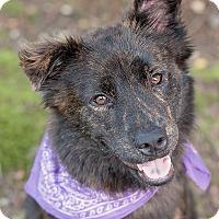 Adopt A Pet :: Maybe - Kingwood, TX