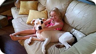Boxer/American Bulldog Mix Dog for adoption in PARSIPPANY, New Jersey - WHEELER