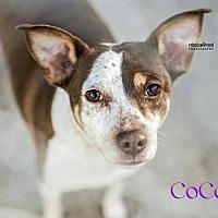 Adopt A Pet :: CoCo - Crandall, GA