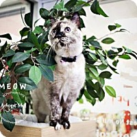 Domestic Mediumhair/Domestic Shorthair Mix Cat for adoption in Kansas City, Missouri - Mow