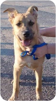 Labrador Retriever/Hound (Unknown Type) Mix Dog for adoption in Rising Sun, Indiana - Scrappy