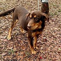 Adopt A Pet :: Georgia - Valley, AL