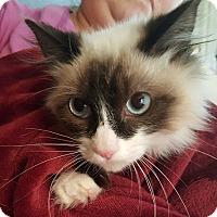 Adopt A Pet :: Micha - Alhambra, CA