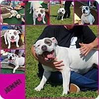 Adopt A Pet :: Jenni - Yuba City, CA