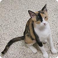 Adopt A Pet :: Saphire - Georgetown, TX