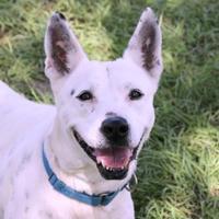 Adopt A Pet :: Gypsy - Loxahatchee, FL
