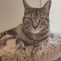 Adopt A Pet :: Alex - Hastings, MN