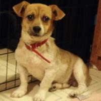 Adopt A Pet :: Zippy - Fairfield, OH