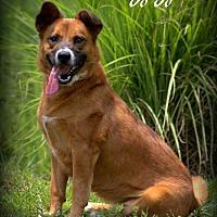 Adopt A Pet :: JoJo - Dixon, KY