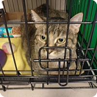 Adopt A Pet :: Clementine - Avon, OH