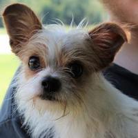 Adopt A Pet :: Hannibal - Kinston, NC