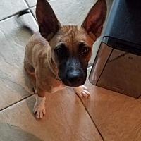 Adopt A Pet :: Rogan - Tampa, FL