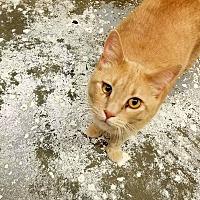 Adopt A Pet :: Snowflake - Douglas, WY