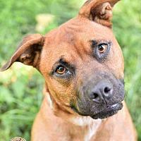 Adopt A Pet :: Liam - Mt. Vernon, IN