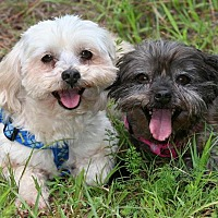 Adopt A Pet :: Happy and Shorty - Rochester, NY