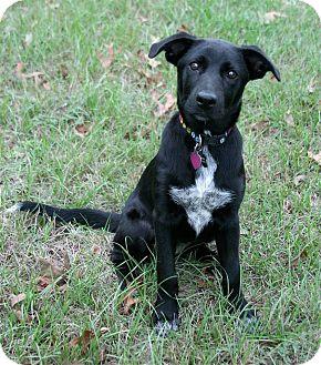 Labrador Retriever Mix Dog for adoption in Lufkin, Texas - Lucy Lu