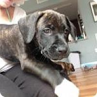 Adopt A Pet :: Baby Bella - Marlton, NJ