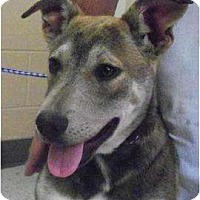 Adopt A Pet :: Gracie - FOSTER NEEDED - Seattle, WA