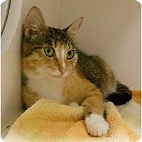 Adopt A Pet :: Candy - Maywood, NJ