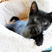 Adopt A Pet :: Patrick - Xenia, OH