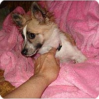 Adopt A Pet :: Maddy - Rigaud, QC