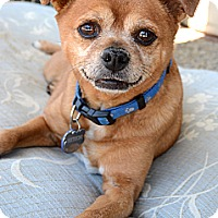 Adopt A Pet :: Chad - Acton, CA