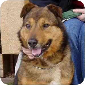 German Shepherd Dog Mix Dog for adoption in Berkeley, California - Darshan
